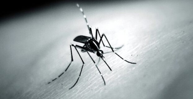 Ledum Palustre e come difendersi dalle le zanzare